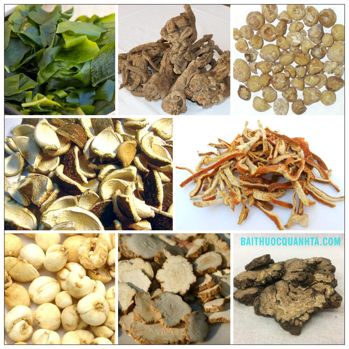 Một số bài thuốc trong bài hải tảo ngọc hồ thang
