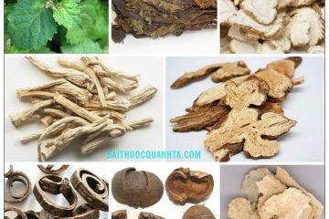 Bài thuốc Hoắc hương chính khí tán chữa tiêu chảy, sốt, sợ lạnh 4