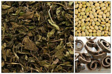 Bài thuốc Hương nhu ẩm chữa cảm vào mùa hè, nôn mửa, tiêu chảy 13