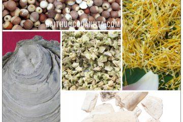 Bài thuốc Kim tỏa cố tinh hoàn dùng chữa hoạt tinh, di tinh 2
