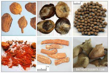 Bài thuốc Ngọc khu đan chữa ngộ độc thực phẩm nhẹ 6